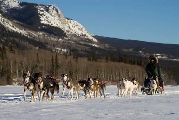 Tagish Lake Kennel & Tuthsi Sled Dog Tours